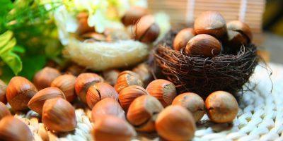 Фундук, полезные свойства ореха